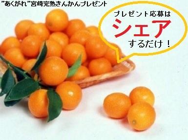 2016-02 プレゼント画像(完熟きんかん)