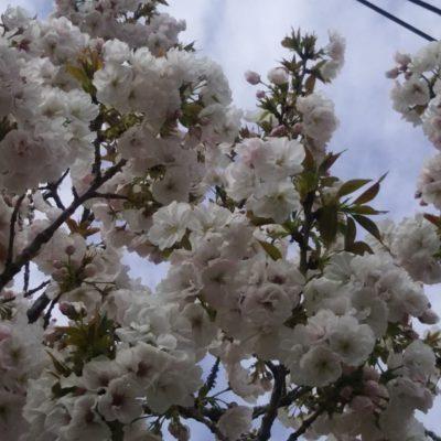 春の嵐を越えて
