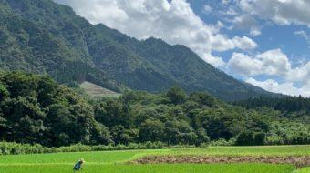【米作り】焼酎製造に合わせて米の収穫を行いました