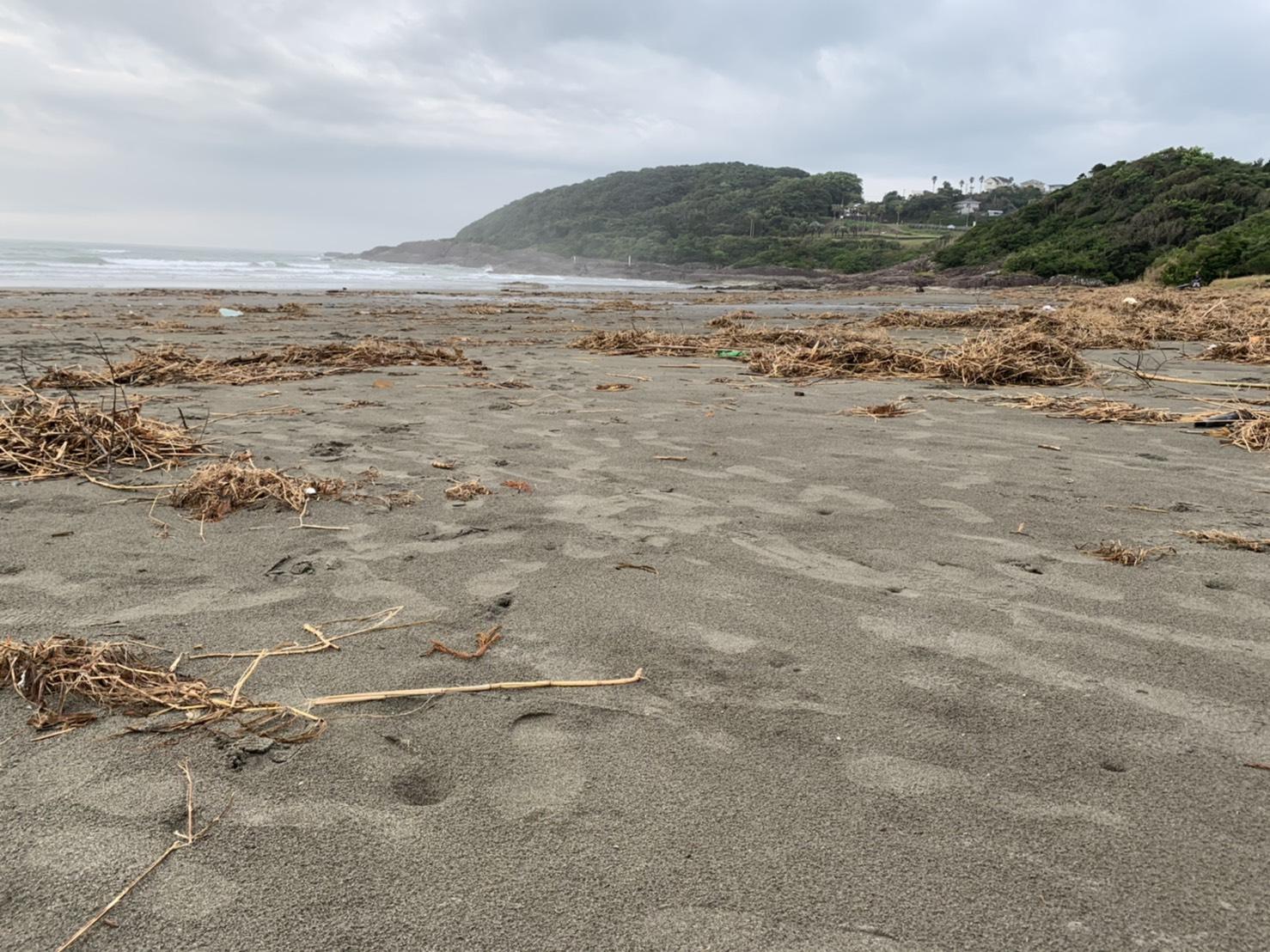 beach_clean002