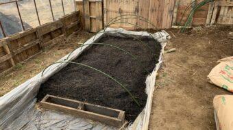 【芋作り】苗床の温床データをまとめました。