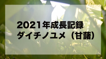 【2021年度】焼酎用ダイチノユメ作り計画