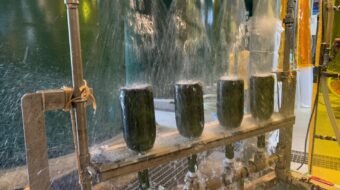 焼酎の瓶詰め工程作業を紹介します。