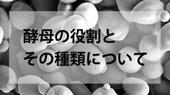 焼酎造りにおける酵母の役割とその種類について