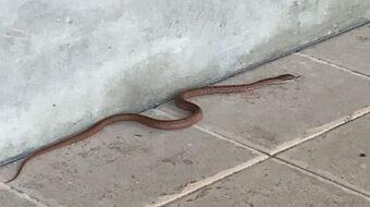 【蔵見学】蛇様ご来蔵!